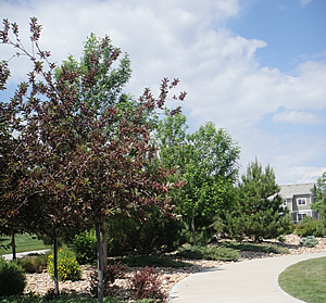 commercial landscaping and maintenance Centennial